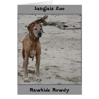Rowdy, Rawhide Rowdy, Langlais Zoo Card