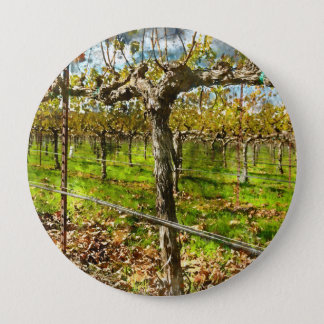 Rows of Grapevines in Napa Valley California 4 Inch Round Button