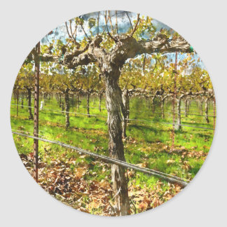 Rows of Grapevines in Napa Valley California Classic Round Sticker