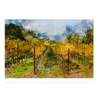 Rows of Grapevines in Napa Valley California Postcard