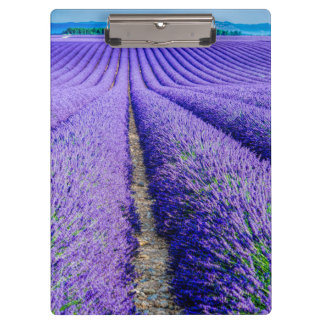 Rows of Lavender, Provence, France Clipboards