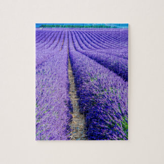 Rows of Lavender, Provence, France Jigsaw Puzzle