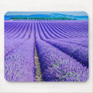 Rows of Lavender, Provence, France Mouse Pad
