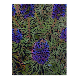 Rows of Purple California Lavender Plant Del Mar Postcard