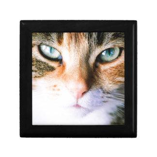 Roxie the cat gift box