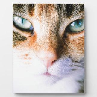 Roxie the cat plaque