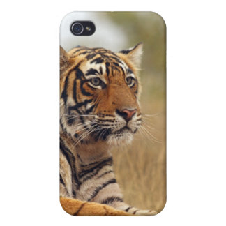 Royal Bengal Tiger - a close up, Ranthambhor iPhone 4/4S Covers