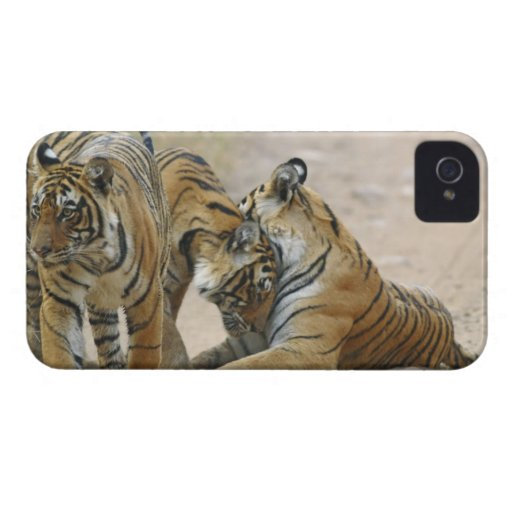 Royal Bengal Tiger and young ones - touching Blackberry Bold Covers