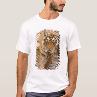 Royal Bengal Tiger coming out of jungle pond, T-Shirt