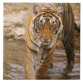 Royal Bengal Tiger coming out of jungle pond, Tiles