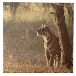 Royal Bengal Tiger on look out for prey, Tile