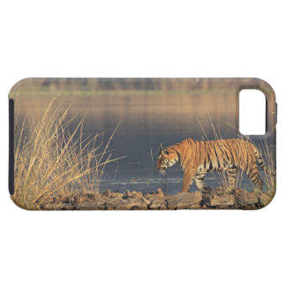 Royal Bengal Tiger on the move, Ranthambhor 2 Case For The iPhone 5