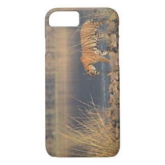 Royal Bengal Tiger on the move, Ranthambhor 2 iPhone 7 Case