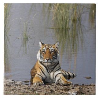 Royal Bengal Tiger sitting in the Rajbagh Lake, Ceramic Tile