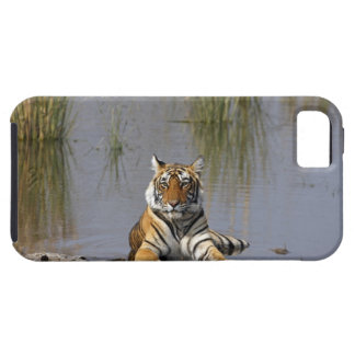 Royal Bengal Tiger sitting in the Rajbagh Lake, iPhone 5 Cover