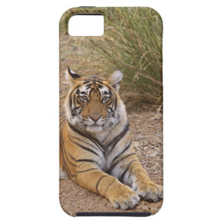 Royal bengal Tiger sitting outside grassland, iPhone 5 Covers