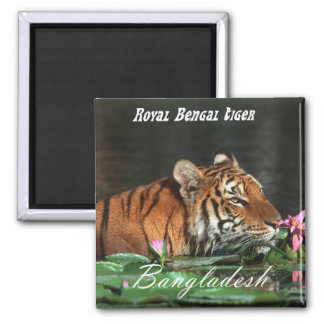 Royal Bengal Tiger Square Magnet