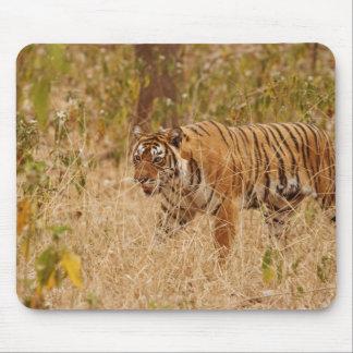 Royal Bengal Tiger walking around the bush, Mouse Pad