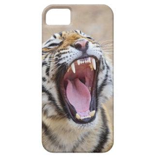 Royal Bengal Tiger yawning, Ranthambhor National iPhone 5 Cover