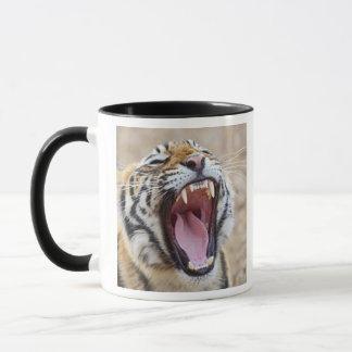 Royal Bengal Tiger yawning, Ranthambhor National Mug
