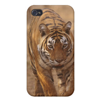 Royal Bengal Tigers on the track, Ranthambhor iPhone 4/4S Cases