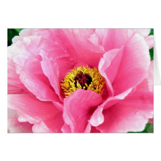 Royal Peony Note Card