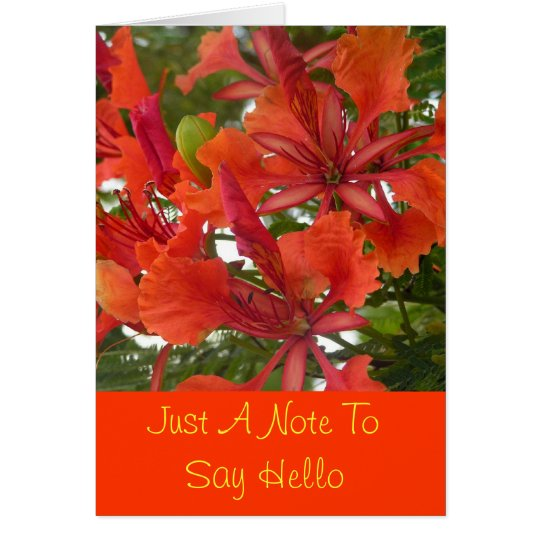 Royal Poinciana Flower Greeting Card