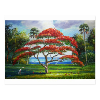 Royal Poinciana Tree Mazz Postcard