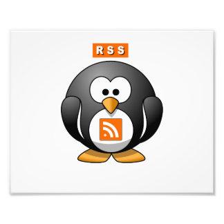RSS Penguin Photo