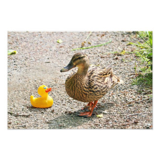 Rubber Duck and Mother Duck Photographic Print