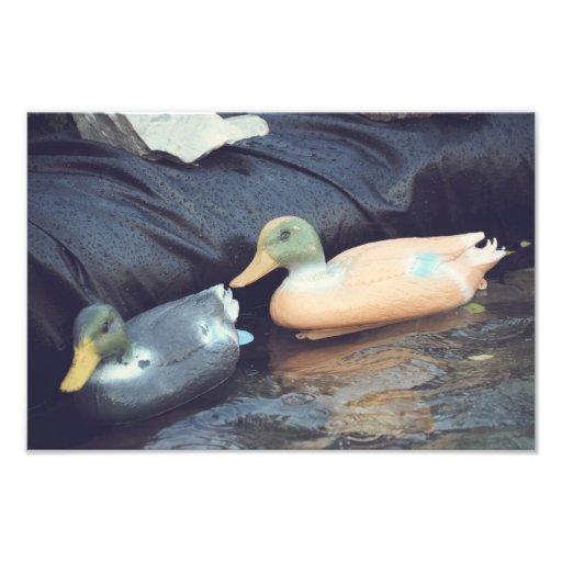 Rubber ducks photographic print