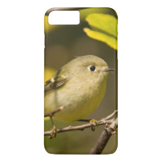 Ruby-crowned Kinglet iPhone 7 Plus Case