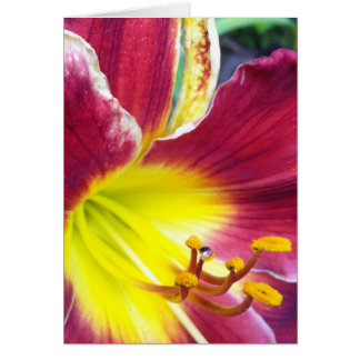 Ruby Day Lily Greeting Card