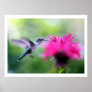 """Ruby"" Hummingbird Photography Print"