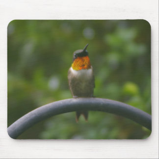 Ruby Throat Hummingbird Mouse Pad