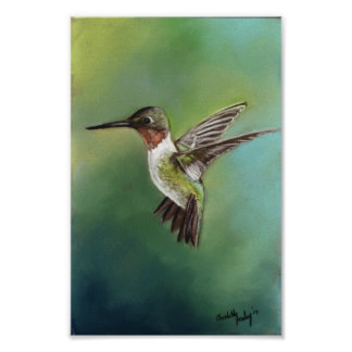 Ruby Throated Humming Bird Art Print