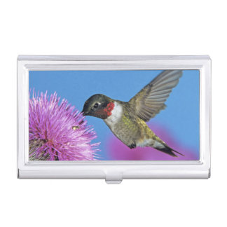 Ruby-throated Hummingbird, Archilochus 4 Business Card Cases