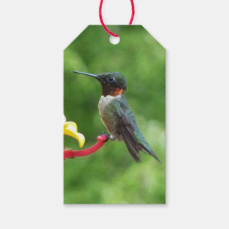Ruby-Throated Hummingbird Bird Photography Gift Tags