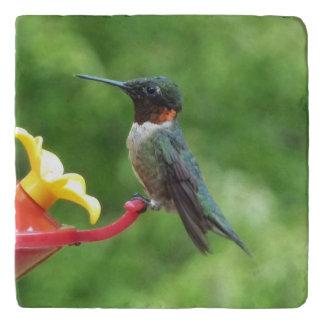 Ruby-Throated Hummingbird Bird Photography Trivet