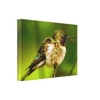 Ruby-Throated Hummingbird Canvas Print
