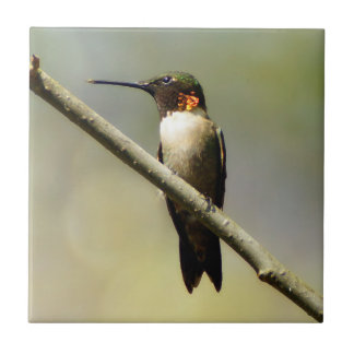 Ruby Throated Hummingbird Ceramic Photo Tile