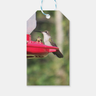 Ruby Throated Hummingbird Gift Tags