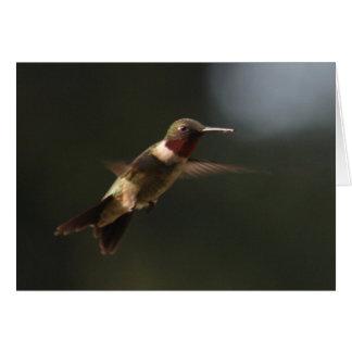 Ruby Throated Hummingbird In Flight Card