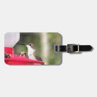 Ruby Throated Hummingbird Luggage Tag