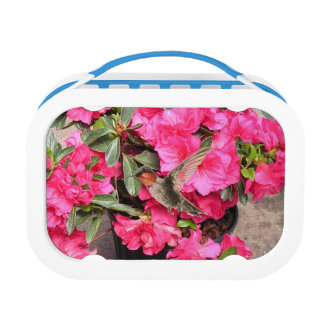 Ruby Throated Hummingbird Lunch Box