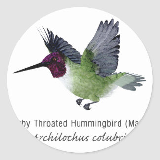 Ruby Throated Hummingbird Male with Name Classic Round Sticker