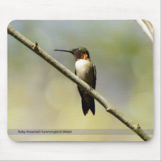 Ruby-Throated Hummingbird Mousepad