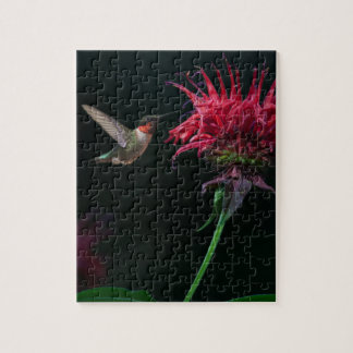 Ruby-throated Hummingbird on Bee Balm Puzzles