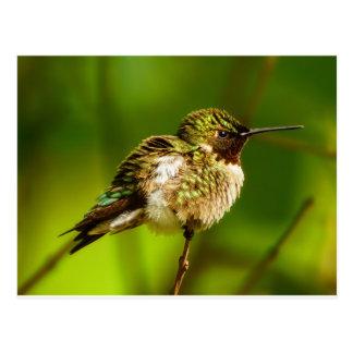 Ruby Throated Hummingbird Postcard