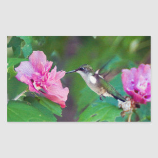 Ruby-Throated Hummingbird Rectangle Sticker